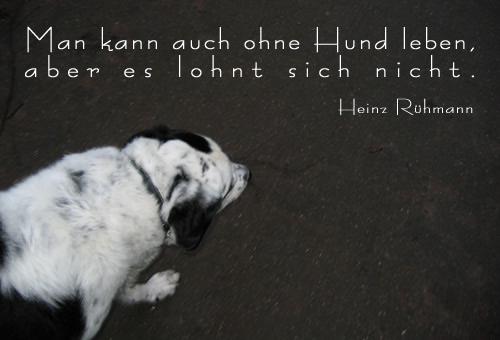 Man kann auch ohne Hund leben, aber es lohnt sich nicht. Heinz Rühmann