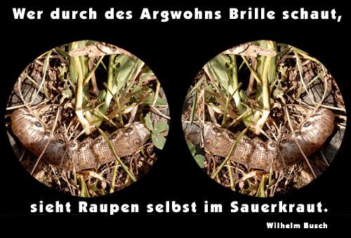 Wer durch des Argwohns Brille schaut, sieht Raupen selbst im Sauerkraut.
