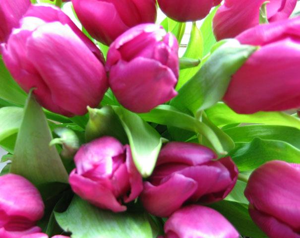 22.02.2005  Tulpen