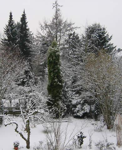 03.03.2005  Garten im Schnee
