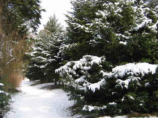 04.03.2005  Schnee im Sentmaringer Park