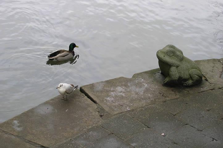 12.03.2005  Ente, Möwe, Frosch (in Soest)