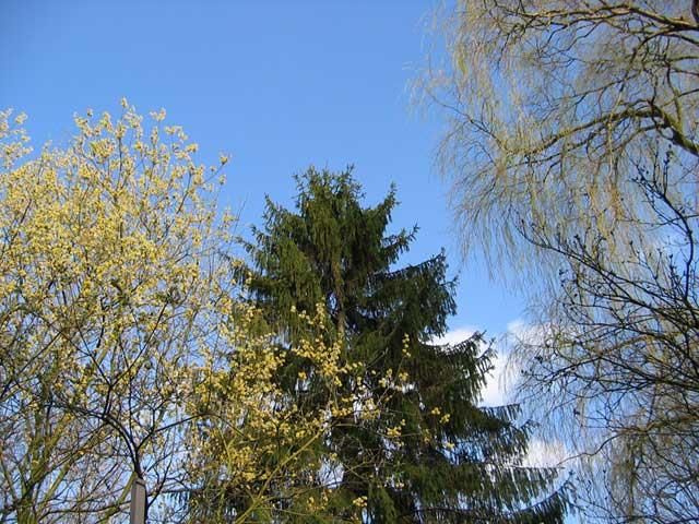 25.03.2005  Bäume