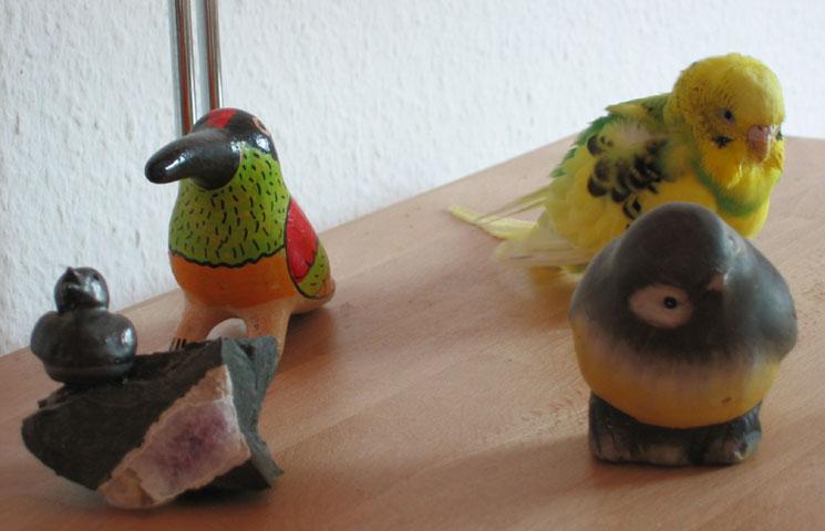 08.06.2005  Vögel