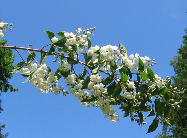 13.06.2005  Blüten