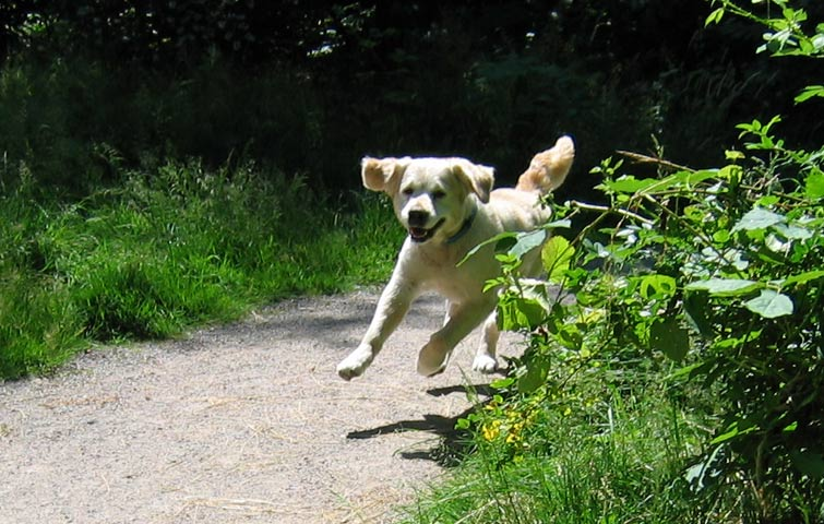 27.06.2005  fliegender Hund