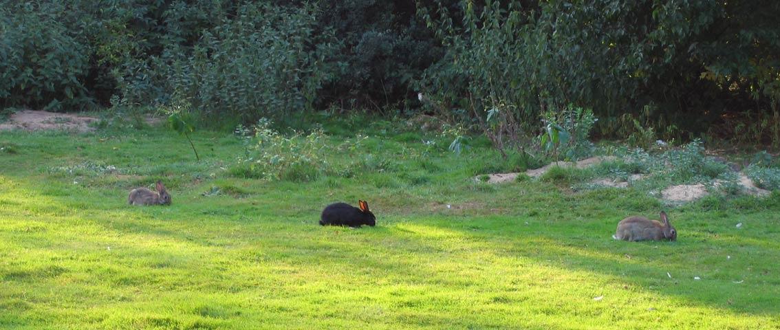 08.09.2005  Kaninchen