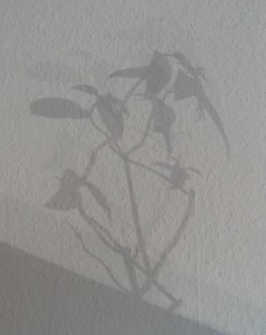 18.10.2005  Schatten