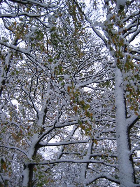 26.11.2005  verschneit