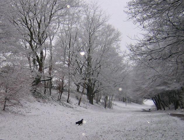 26.12.2005  Barney im Schnee