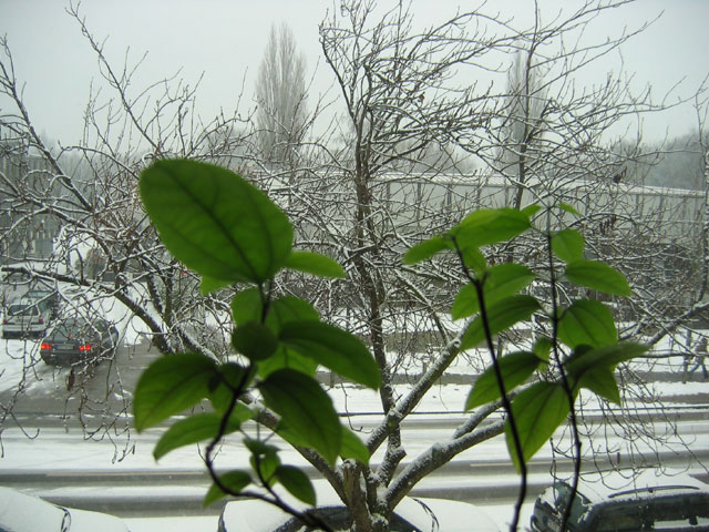 05.02.2006  rot-weiß-grün