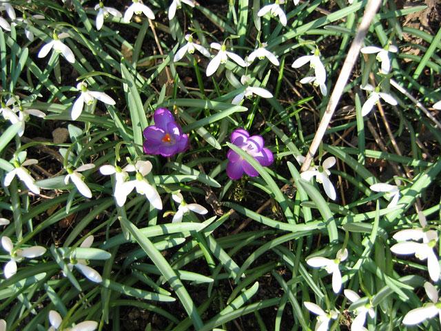 23.03.2006  Frühling