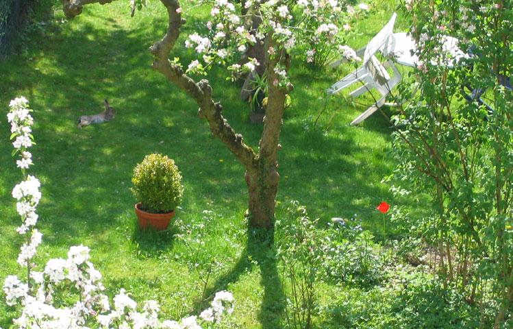 05.05.2006  Hasenrast