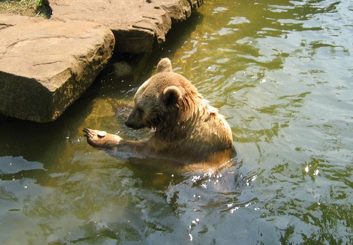 08.05.2006  Bärenmahlzeit