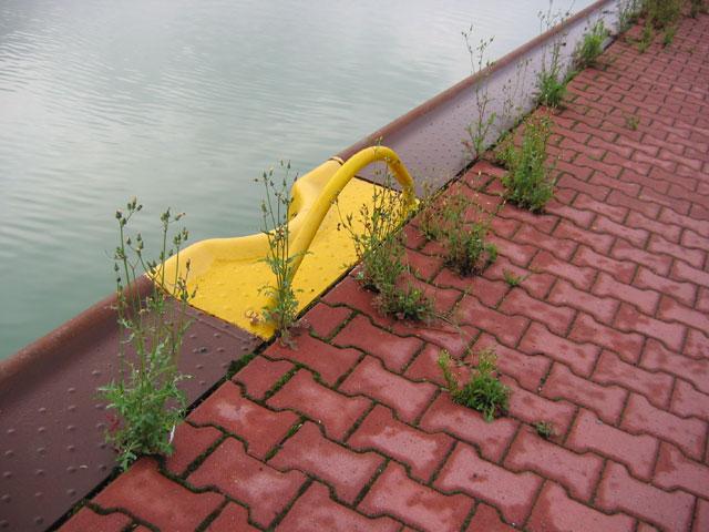 11.08.2006  Am Kanal
