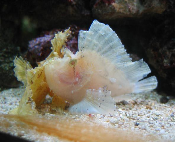 09.12.2006  Aquarium
