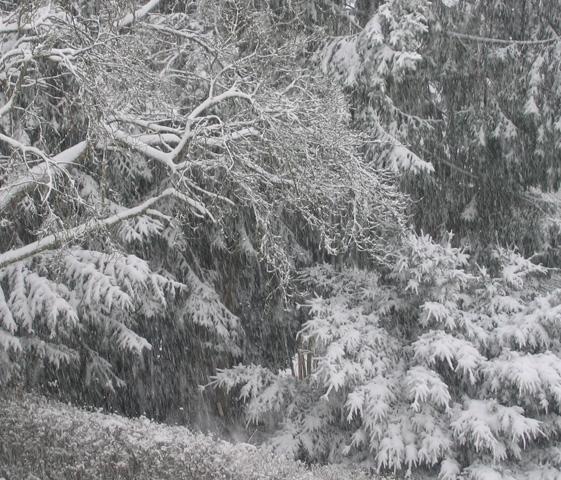 08.02.2007  Schnee