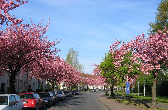 14.04.2007  Sentmaringer Weg