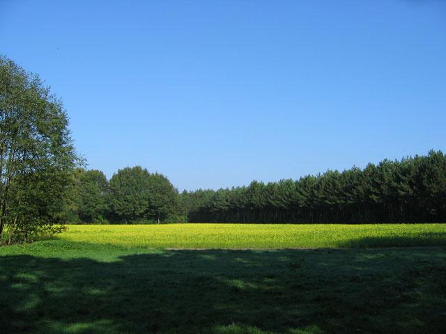 07.10.2007  Rapsfeld