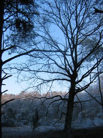 21.12.2007  Bockholter Berge