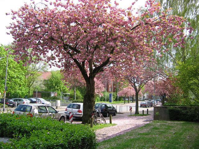29.04.2008  Sentmaringer Weg