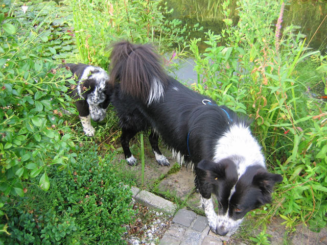 10.08.2008  Hunde