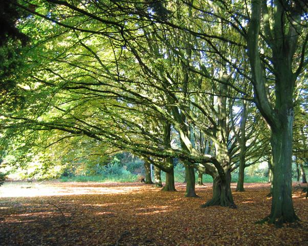17.10.2008  Herbstwald