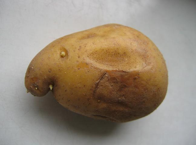 05.11.2008  Kartoffelgesicht