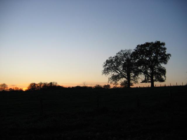 08.11.2008  Zwei Bäume