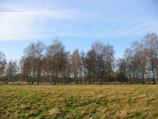 07.12.2008  Birken