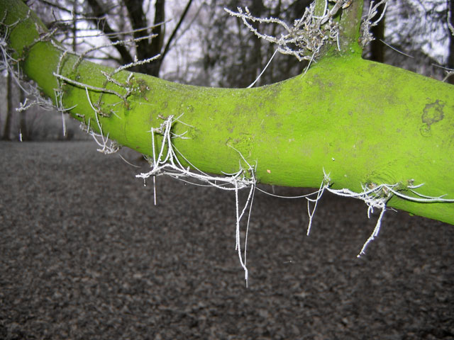 03.01.2009  Spinnenfäden