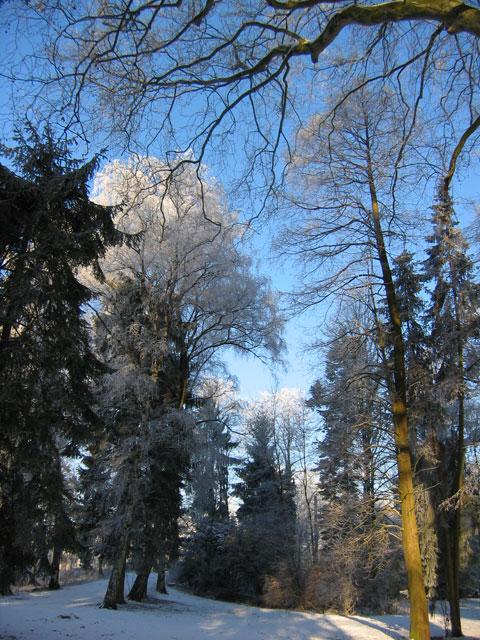 09.01.2009  Sentmaringer Park