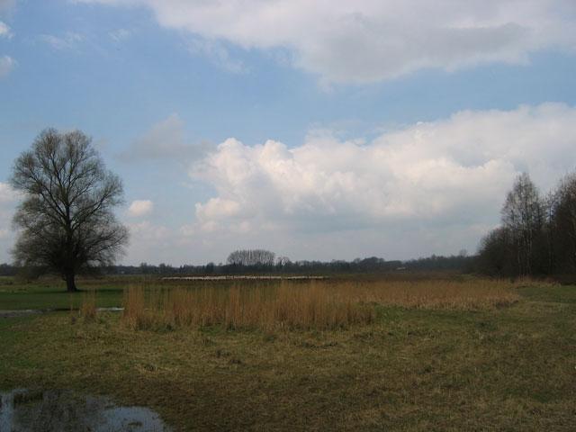 29.03.2009  Schafherde