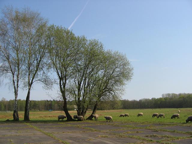 10.04.2009  Schafe