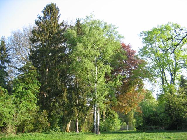 19.04.2009  Bäume