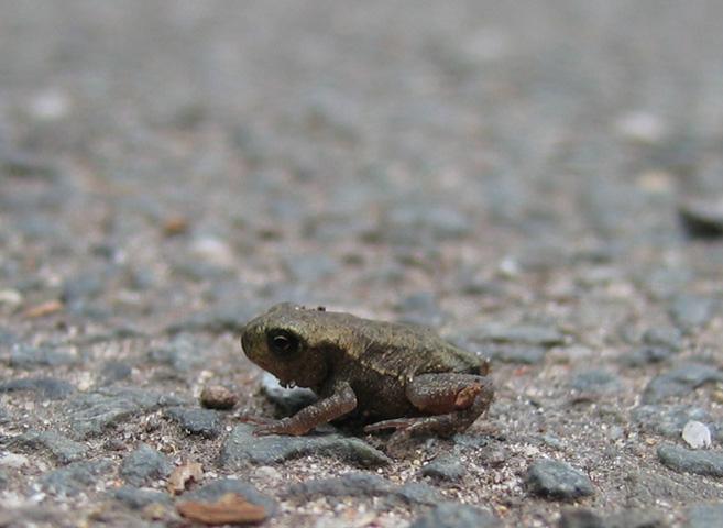07.06.2009  Frosch