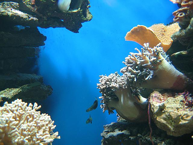 23.07.2009  Unter Wasser