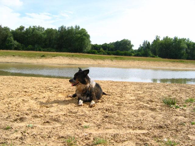 26.07.2009  Sandhund
