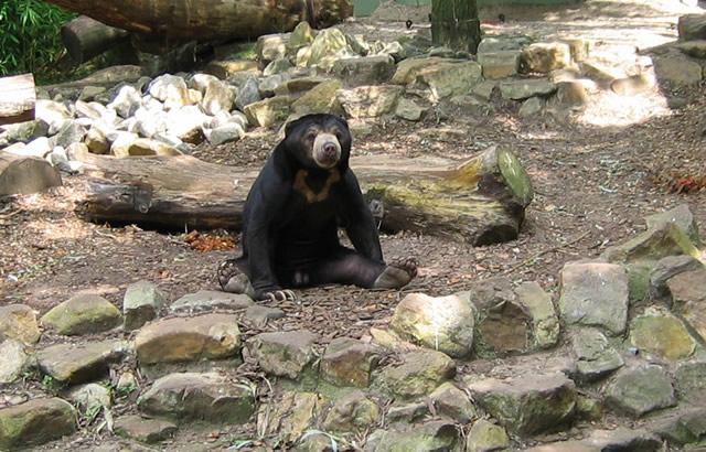 16.08.2009  Malaienbär
