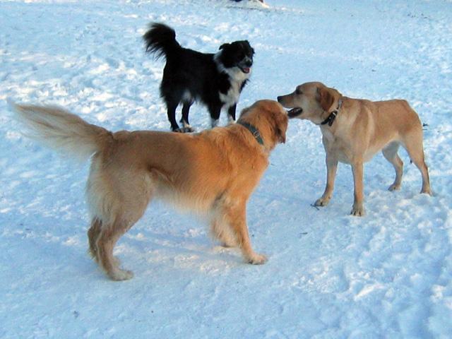 13.01.2010  Hundegespräch
