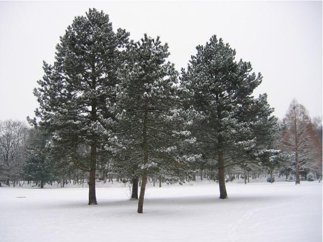 14.02.2010  Bäume
