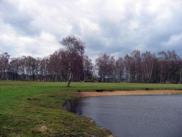 28.03.2010  Birken