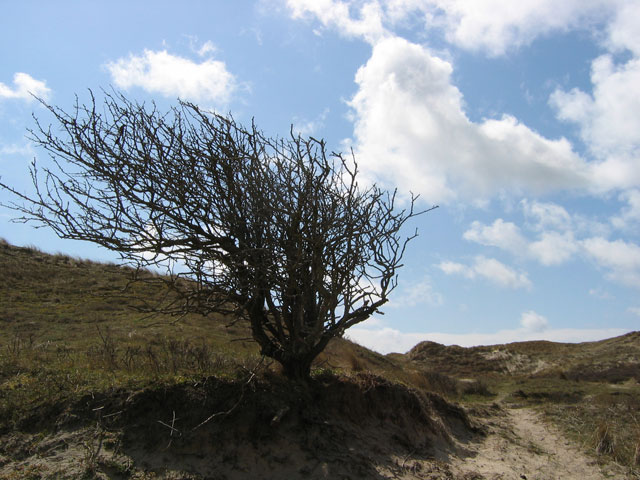 21.04.2010  windschief