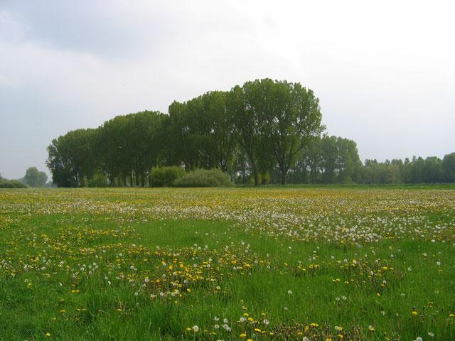 09.05.2010  Blumenwiese