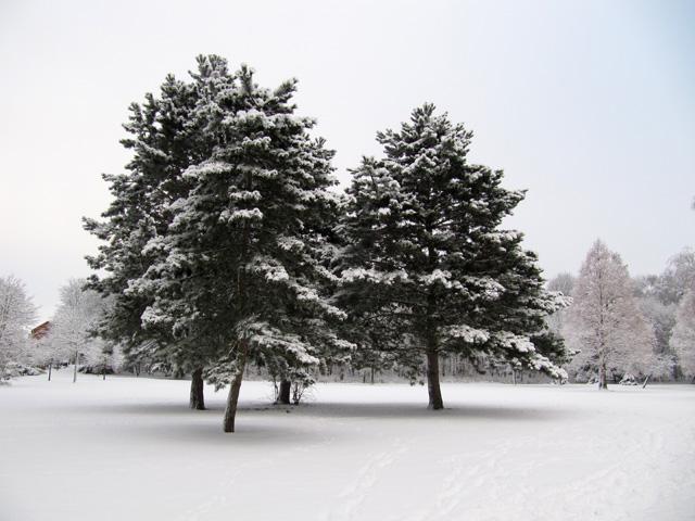 17.12.2010  Bäume
