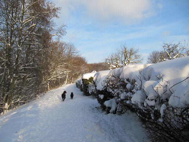 25.12.2010  Schnee