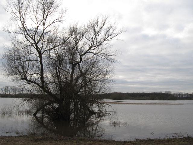 16.01.2011  Hochwasser