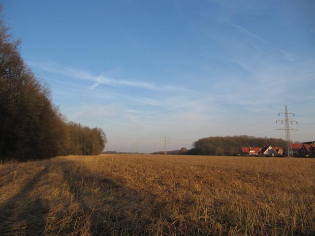 09.02.2011  Kornfeld