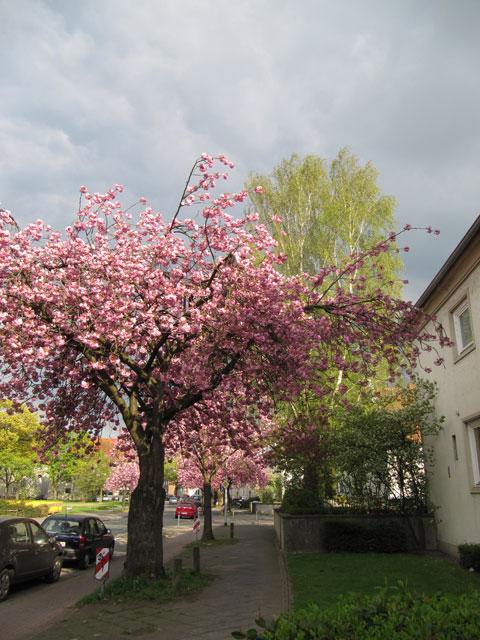 14.04.2011  Sentmaringer Weg