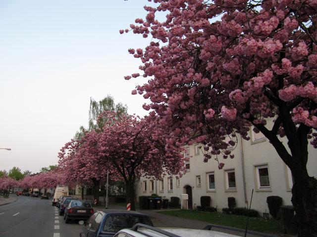 17.04.2011  Sentmaringer Weg